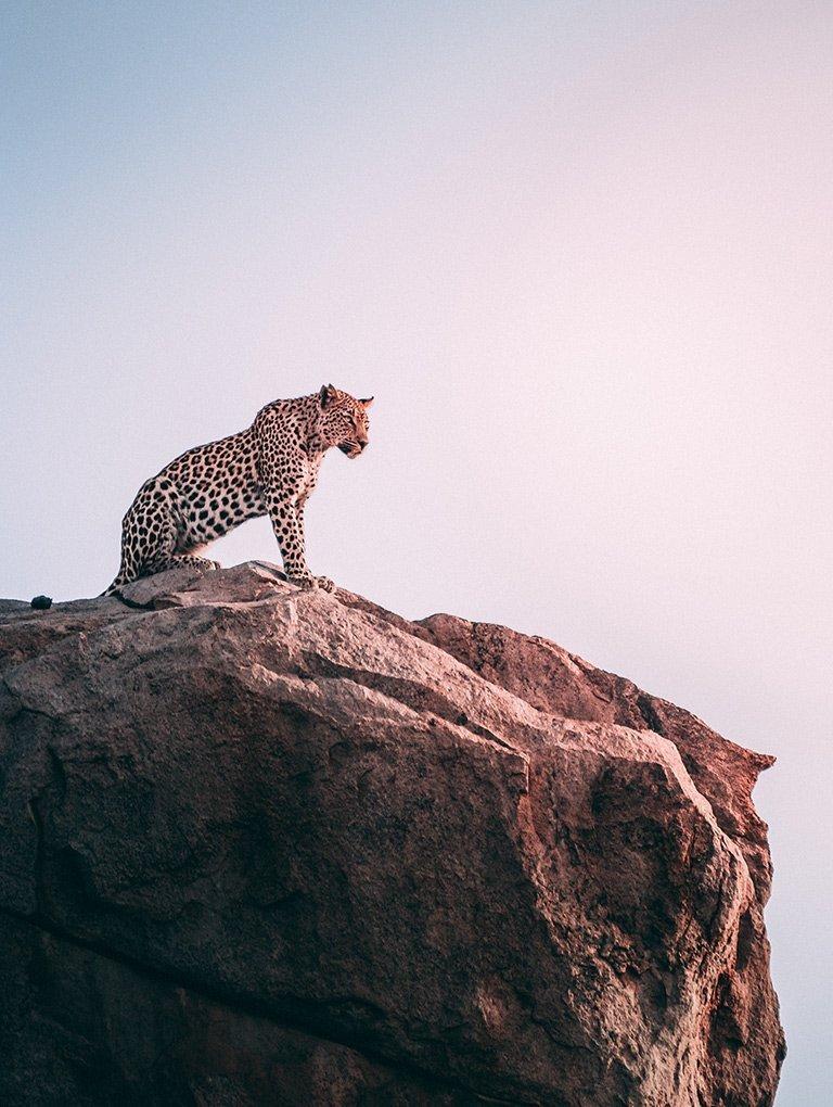 Leopardo en Tanzania