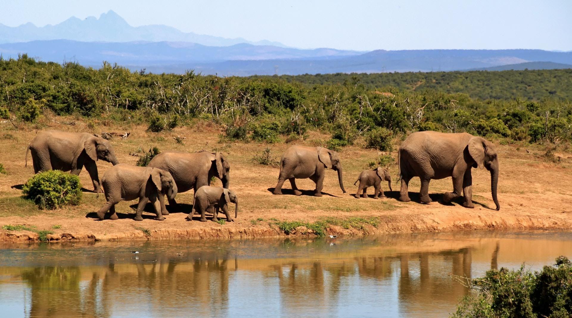 Safari por Africa 2021