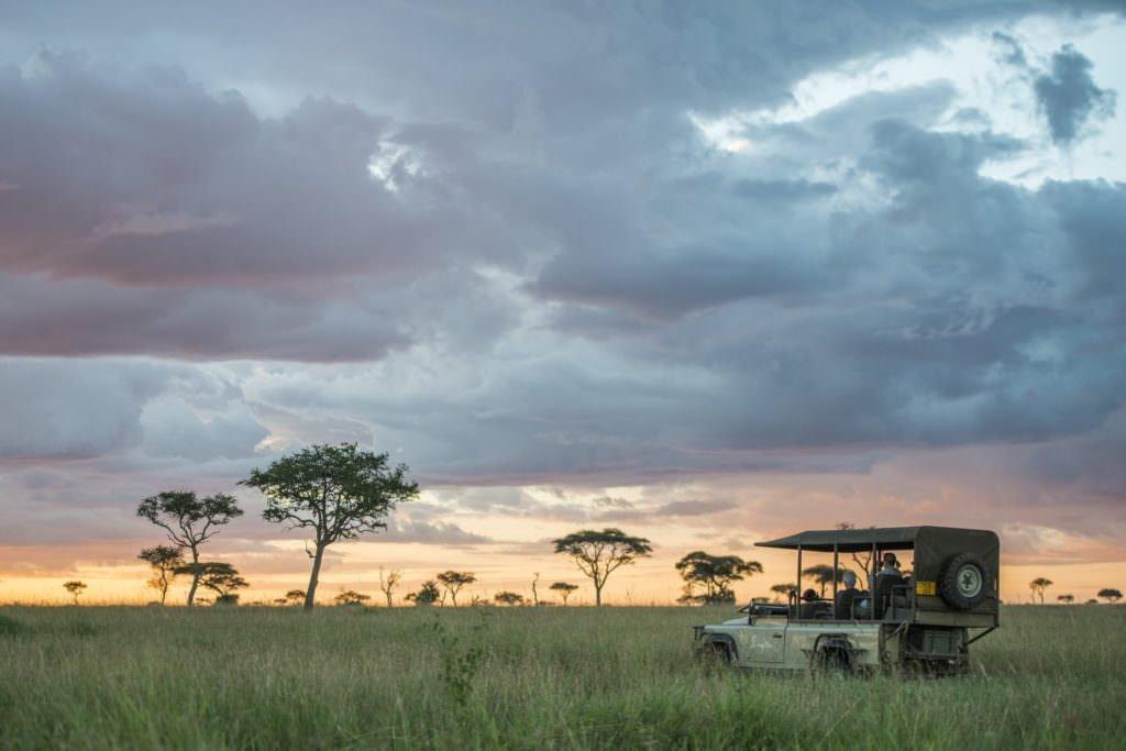 Safari nocturno Africa
